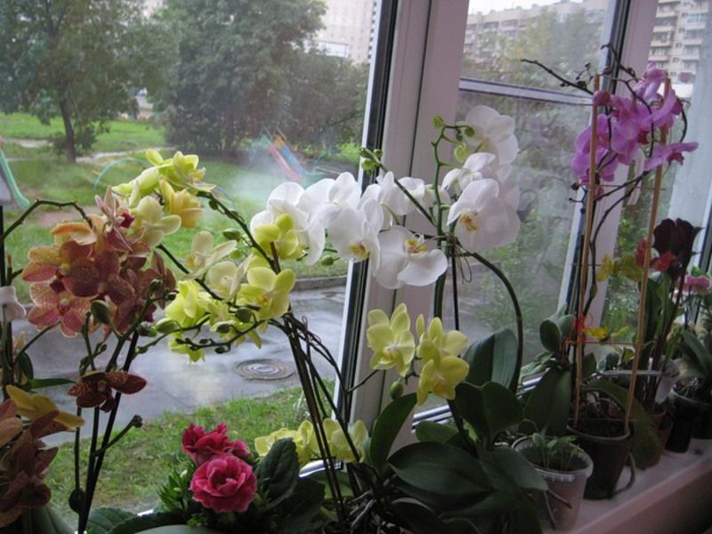 цветут орхидеи
