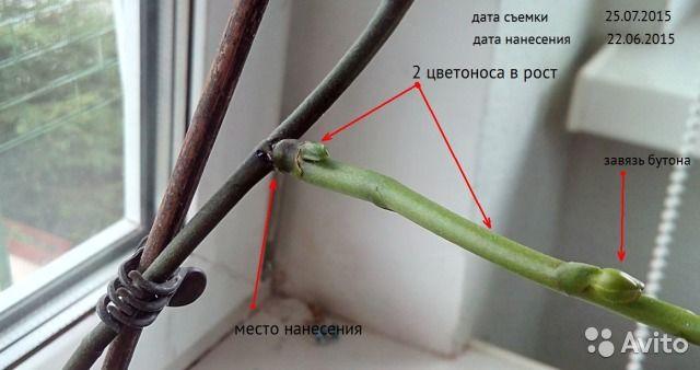 для орхидей  цитокиновую пасту