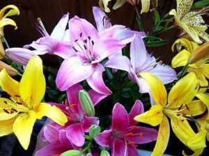 виды лилий