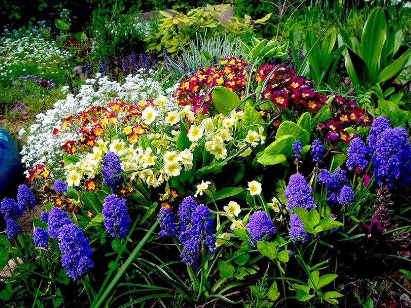 цветок ночная  красавица