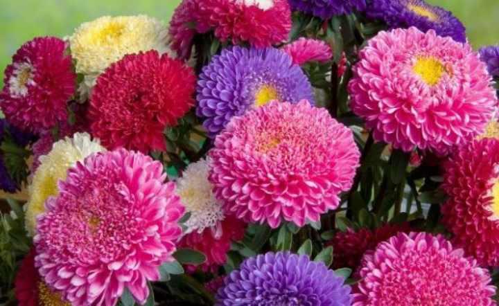 прекрасные цветочки с разнообразной цветовой гаммой