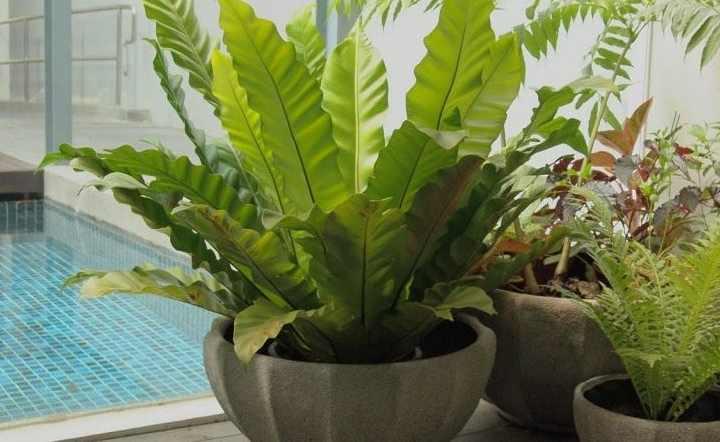 Для данного способа подходит взрослое разросшееся растение