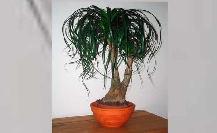 Низкорослое растение, не превышающее двух метров в высоту