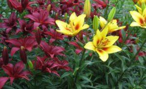 Садовые цветочки, цветущие все летние месяцы
