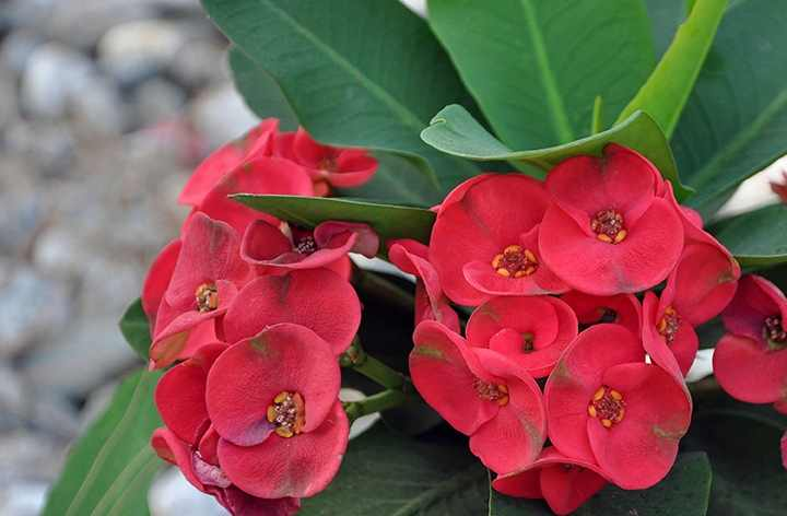 полить тщательно цветок за сутки до пересадки
