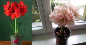 Условия для выращивания в домашних условиях простые