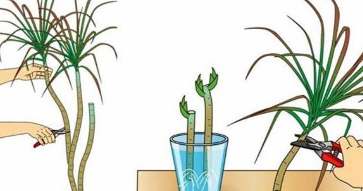 Ровный или наискосок срез верхушки до 15 сантиметров
