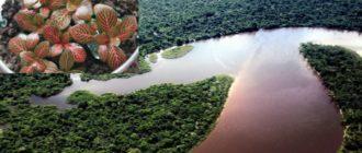 Тропические леса Южной Америки сформировали характер