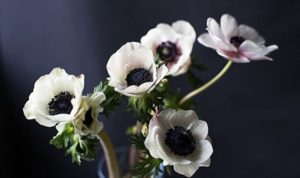 Но бывают и небольшие виды. Не все садоводы могут с точностью определить вид анемоны.
