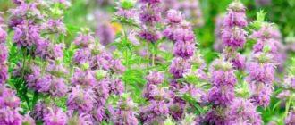 Восхитительные цветы