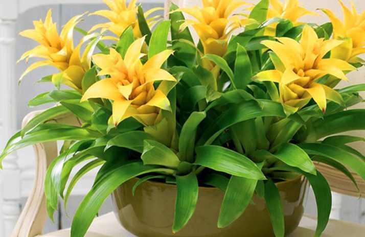 считается самым красивым видом растения
