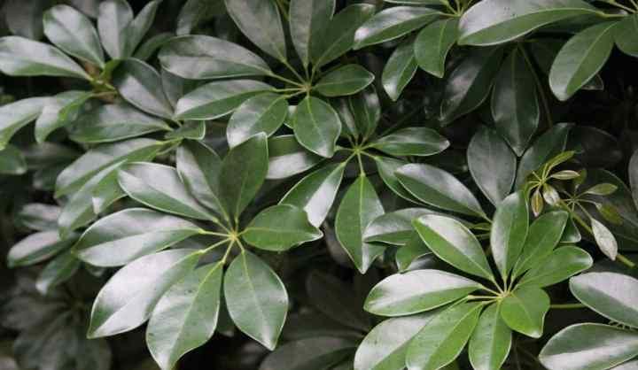 Как выглядит растение