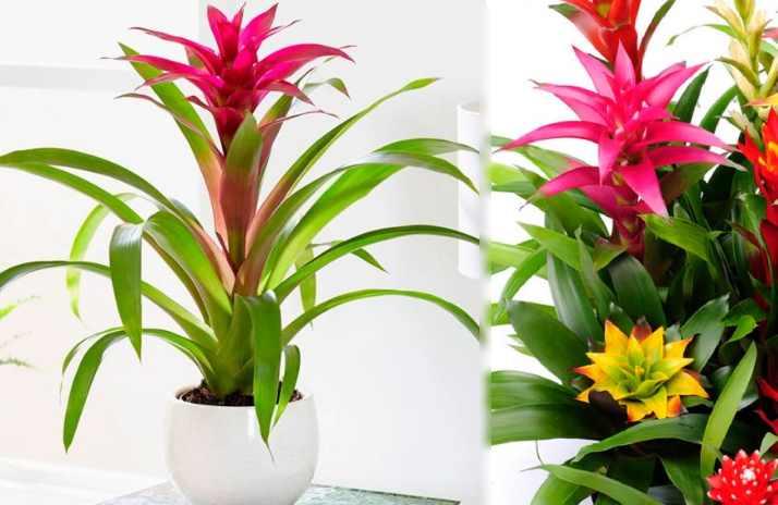 Растение неприхотливые