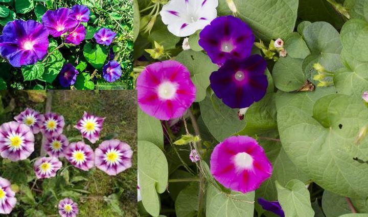 Каирская - на ней несчитанное множество цветков
