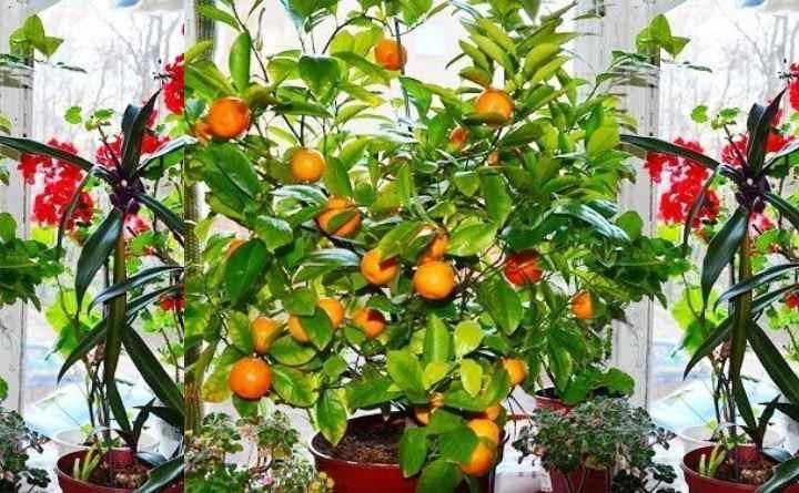 На растении не должно быть вредителей, сгнивших частей, подсохших листьев.