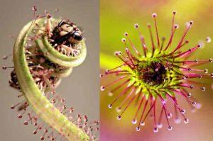 Флора изобилует множеством диковинных, необычных растений.