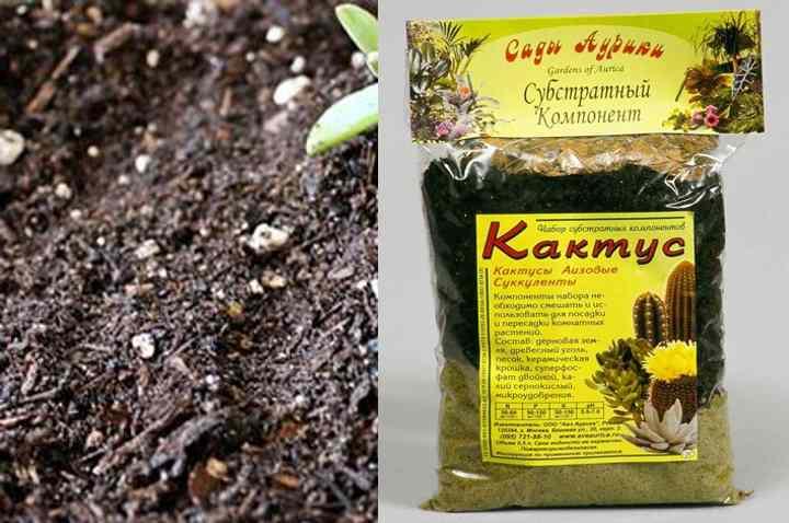 можно самому приготовить грунт из лиственной, торфяной почвы, с добавлением песка