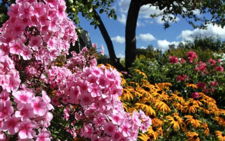 Эти цветы очень популярны среди цветоводов