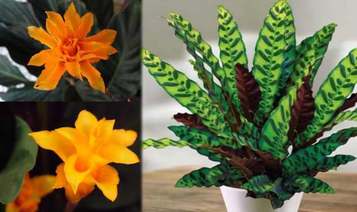 Растение, также, как и человек имеет свое энергетическое поле