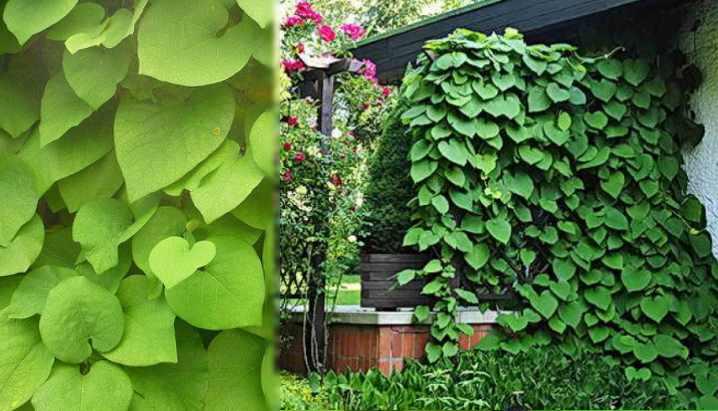На листья могут поселиться гусеницы