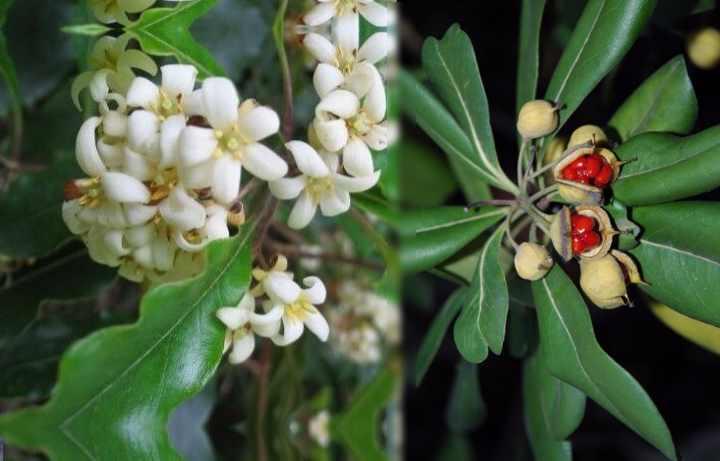 Растение родом из Австралии, Азии