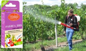 Абига-пик – средство, которое применяется при грибковых