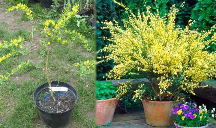 Цветы обычного желтого цвета