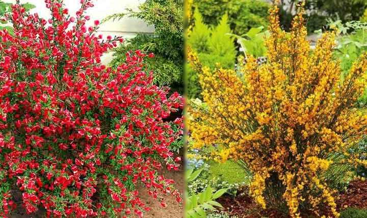 Растение часто используют в дизайне