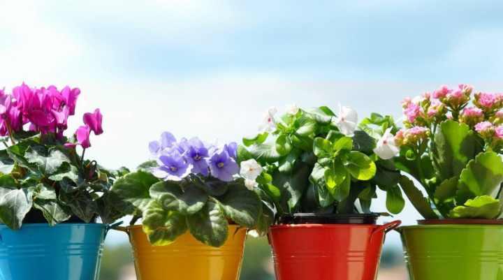 Многие цветы славятся не только своей красотой