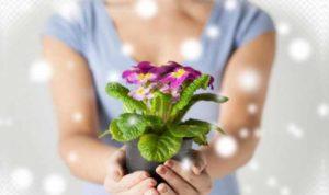 Опытные цветоводы всегда интересуется историей цветка