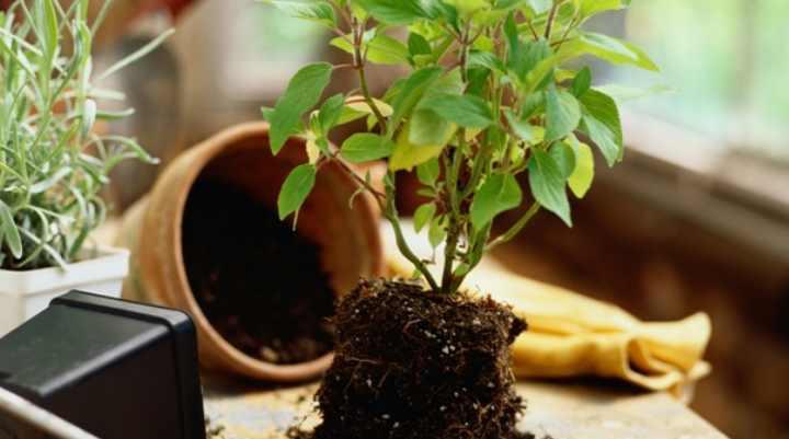 Видов и сортов растений огромное количество