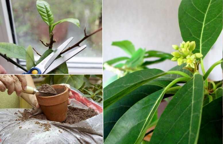 Растение неприхотливое