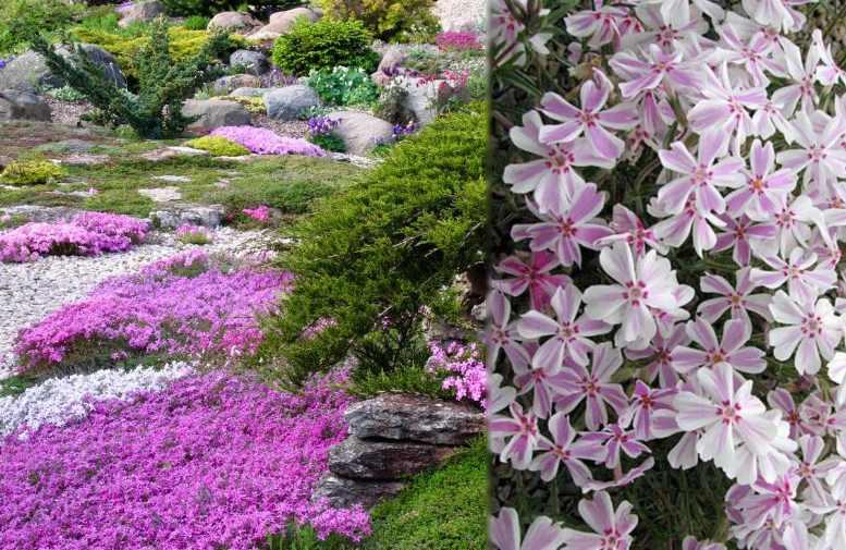Цветет обычно весной
