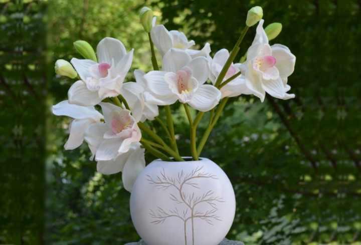 Родиной цветка является Австралия и Азия