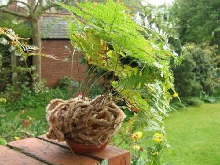 Обязательно удаляйте засохшие листья с растения