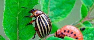 Инсектицид «Банкол» - эффективное средство