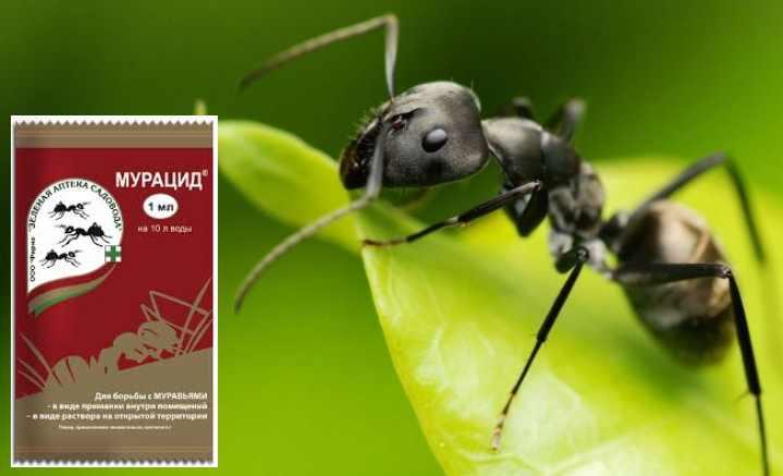 Эти насекомые живут целыми колониями