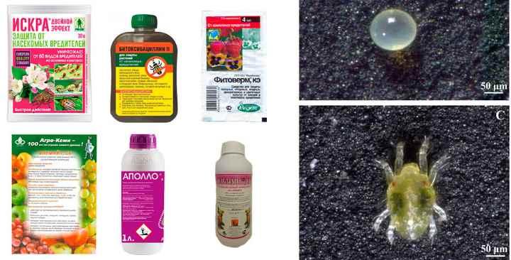 Эффективные акарицидные препараты: