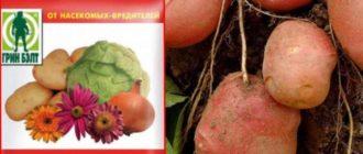 Для защиты растений существует много разных средств