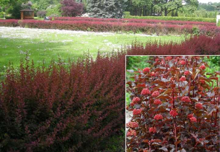 Можно создать ограждение из декоративных кустарников