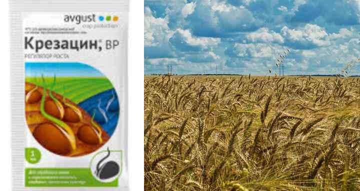 Использование Крезацина позволяет получить богатый урожай