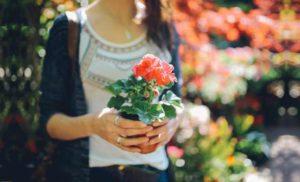 Растения украшают помещение