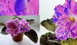 Выбирая растения для своего дома