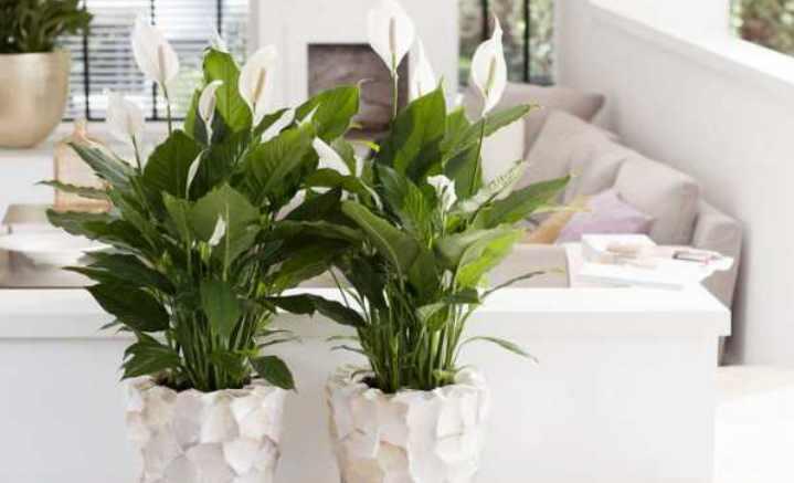 Цветы, которые приносят в дом благополучие, должны быть в кабинете
