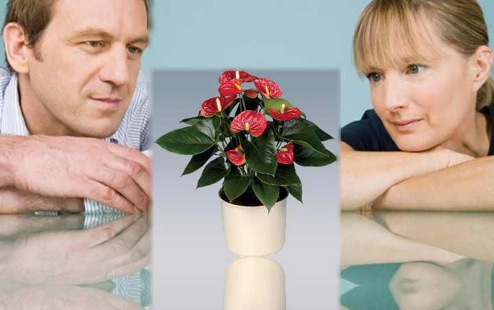 Цветок семейства плюшевых мужегон. Мужегон (цветок): названия, фото, приметы, уход, размножение