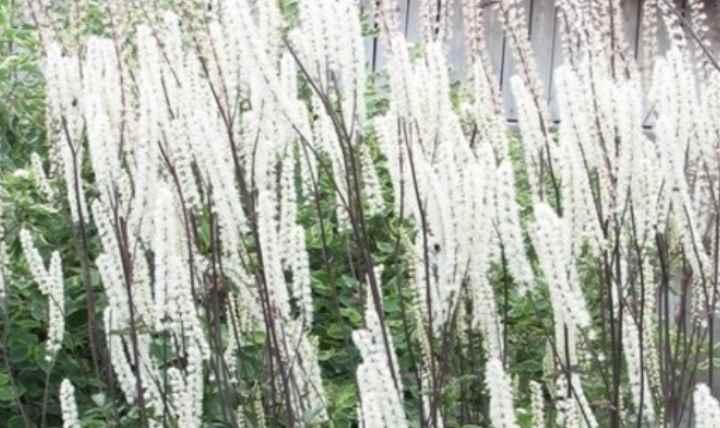 высокая влажность и прохладный воздух могут спровоцировать появление мучнистой росы