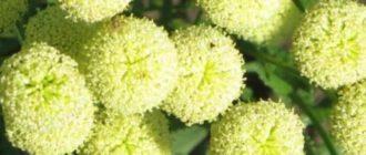 ухаживать за цветами в открытом грунте