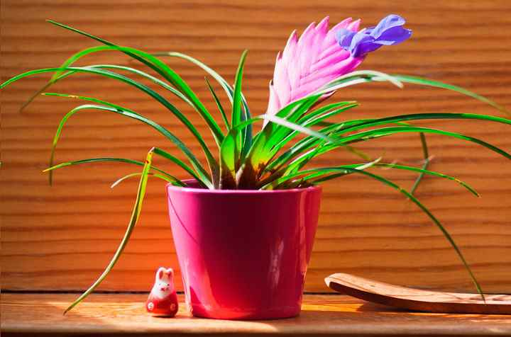 Это растение очень сложно выращивать в квартире