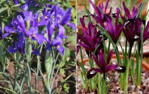 В наше время выведено много различных растений