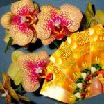 Иногда янтарная кислота может улучшить состояние погибающих растений